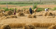 Thumb_kazakh_farmland_cropped_1462527083