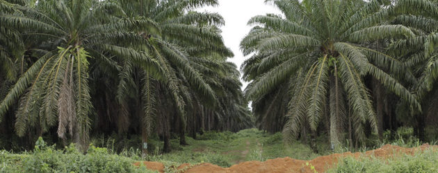 Cables reveal US gov't role in Herakles Farms land grab in Cameroon