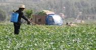 Thumb_crop-food-supply-china-800x400
