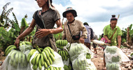 Thumb_lao-workers-in-plantation