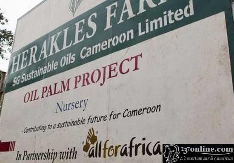 244 fermiers camerounais portent for Portent en espanol