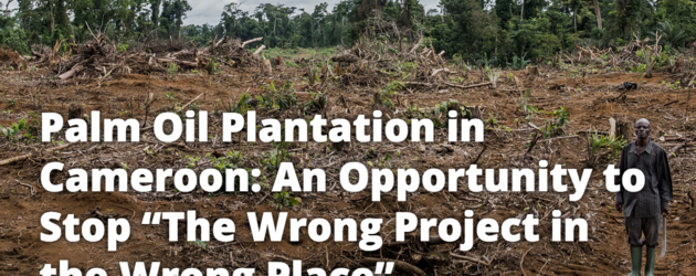 "Palm oil plantation in Cameroon: An opportunity to stop ""the wrong project in the wrong place"""