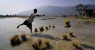 Thumb_paddy-farming-in-india-010