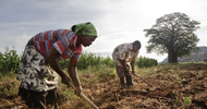 Thumb_0-southern_africa_workers_preparing_fields_to_grow_corn,_gutu_project_irrigation_site