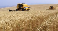 Thumb_combine-harvester-wheat-field-brazil-webheader1-619x413