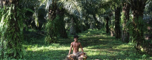 RSPO accused of letting palm oil firm proceed with dodgy audits in Papua