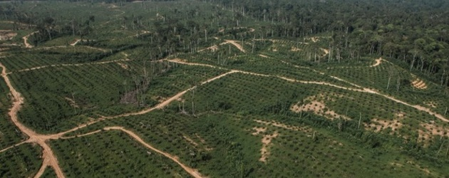"""Green"" oil palm plantations are a scam: The case of OLAM"