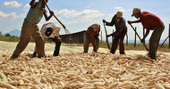 Thumb_africa_contract_farming