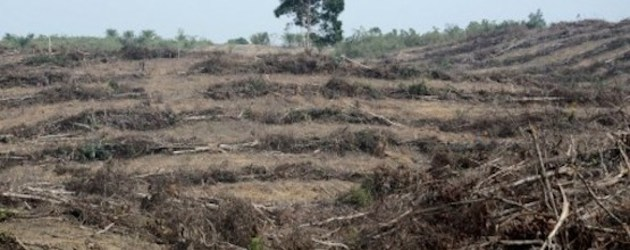 Indonesian province revokes palm oil licenses