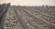 Thumb_potatoes-zoom1-senegindia-agriculture-project-770x440