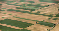 Thumb_germany-giant-eyes-land-for-serbian-pig-farms_strict_xxl