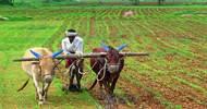 Thumb_india_farming