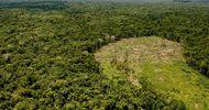 Thumb_noticia-deforestacion
