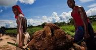 Thumb_drc_lokutu-oil-palm-plantation_feronia_low