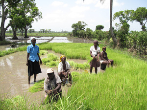 Original_0-haiti_original_women_farmers_at_rice_cooperative_in_northern_haiti_photo_salena_tramel_grassroots_international