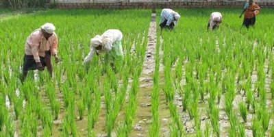 China started to buy aggressively agriculture land abroad