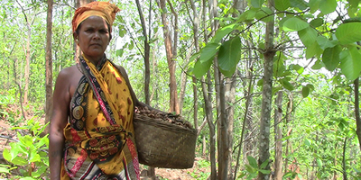 India: Plantations uproot women from their customary forests