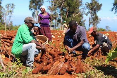 Les réformes foncières en Afrique de l'Ouest doivent protéger les petits exploitants agricoles, selon un rapport de la Fao