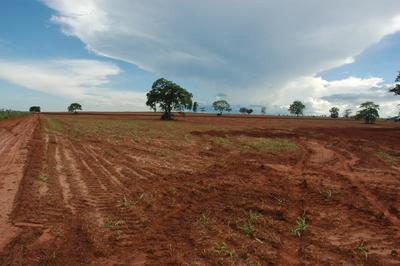 Audio: Impacts of agriculture on Brazil's Cerrado region