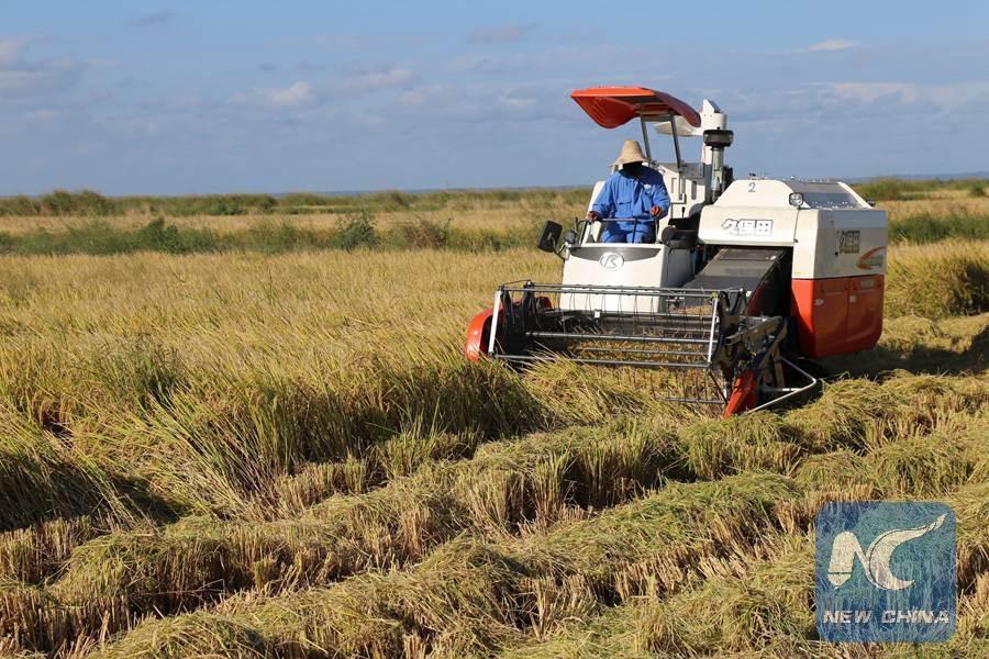 Farmlandgrab Org Chinese Rice Farm Brings Modern Agriculture To Mozambican Farmers