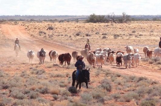 Kidman cattle station investment clubs multi currency forex card means to an end