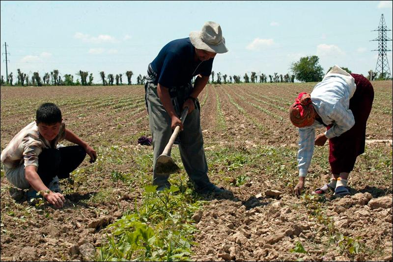 farmlandgrab org | UAE company to start producing