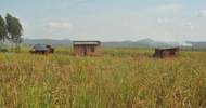 Thumb_houses_in_the_middle_of_the_sugarcane_plantation_(photo_by_witness_radio)