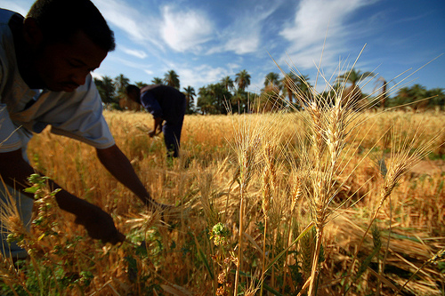 farmlandgrab org | OPIC approves $150 mln in financing for