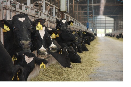 farmlandgrab.org | La Chine crée des remous en Nouvelle ...