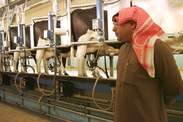 farmlandgrab org | Hidden billionaire milking Saudi dairy