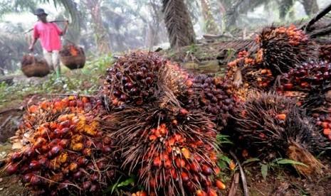 Palm oil in malaysia 2013