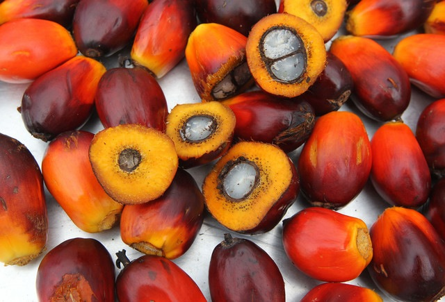 Red Palm Oil – How to make money from this lucrative but overlooked business