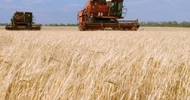 Thumb_russian-combines-in-the-fiels-at-harvest