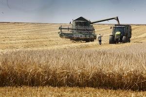 Farmlandgrab.org terres agricoles en roumanie : champ libre à la