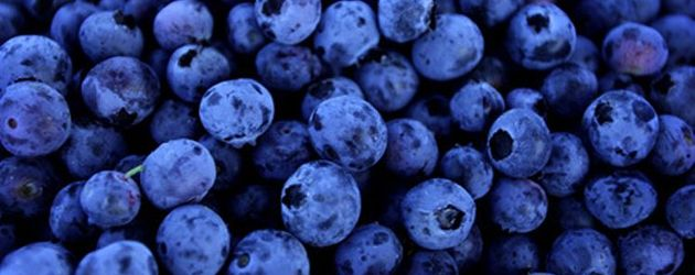 DGC to launch blueberry investment vehicle