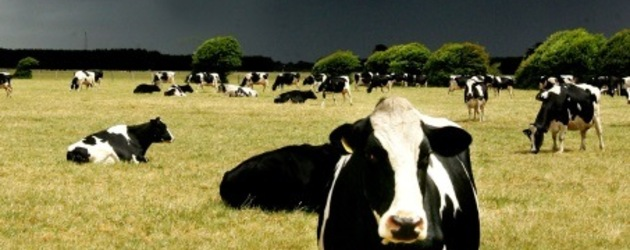 Australia: China sour on dairy management