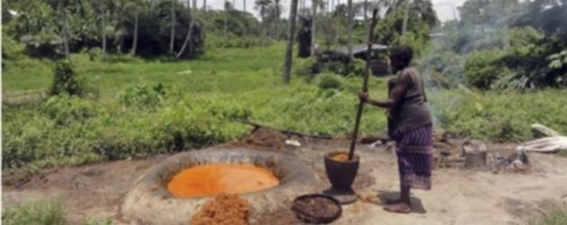 Planète huile de palme : les paysans payent le prix fort pour l'huile de palme bon marché