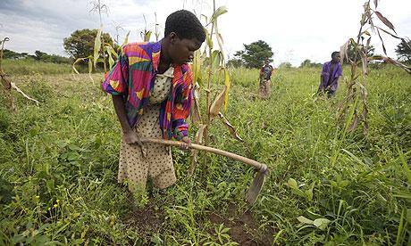 original Katine farmer woman Women in Paraguay