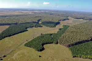 farmlandgrab.org | Uruguay: Trasnacionales con al menos 10% de la tierra productiva en Uruguay