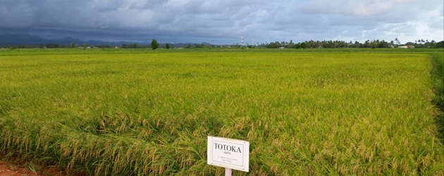 Fiji: $10m investment for rice industry