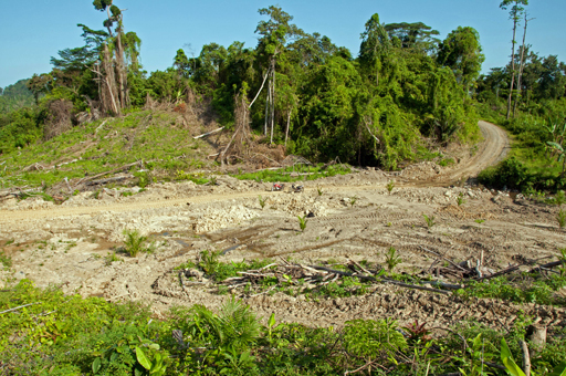agriculture and current deforestation practices Commercial agriculture is the most important driver of deforestation, followed by   in a post-paris era: between evolving expectations and current practice.