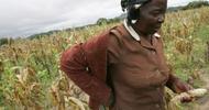 Thumb_zimbabwe_agriculture_paysan432
