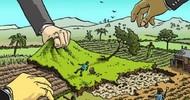 Thumb_acaparamiento-de-tierras