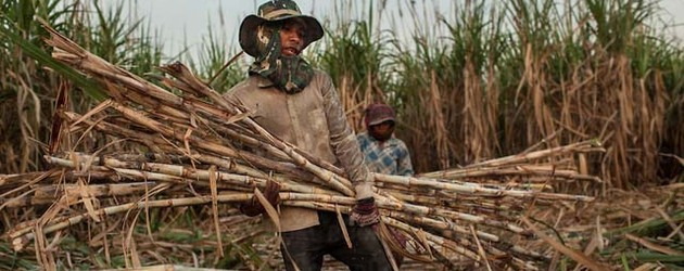 Thai company's return to sugar group challenged by NGOs