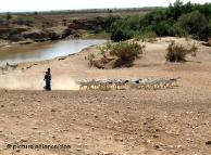 Nómadas en Somalia.