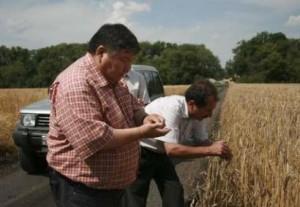 Aug 5th, 2008 (Reuters) - Murat Shamshinurov (L) general director of Nastyusha Black Earth, and Valery Yurov, executive director of Nastyusha-Petrovsky farm, inspect wheat prior to harvesting in the village of Petrovsky, Lipetsk region, July 16, 2008. (Reuters)