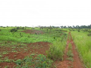 IKO's large-scale land concession near Nanga-Eboko. The lands are  currenlty used by local communites for farming and hunting and  gathering.