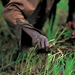 farmlandgrab org   Saudi Arabian company to invest $100m in